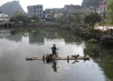 Cormorant fishing as tourist attraction
